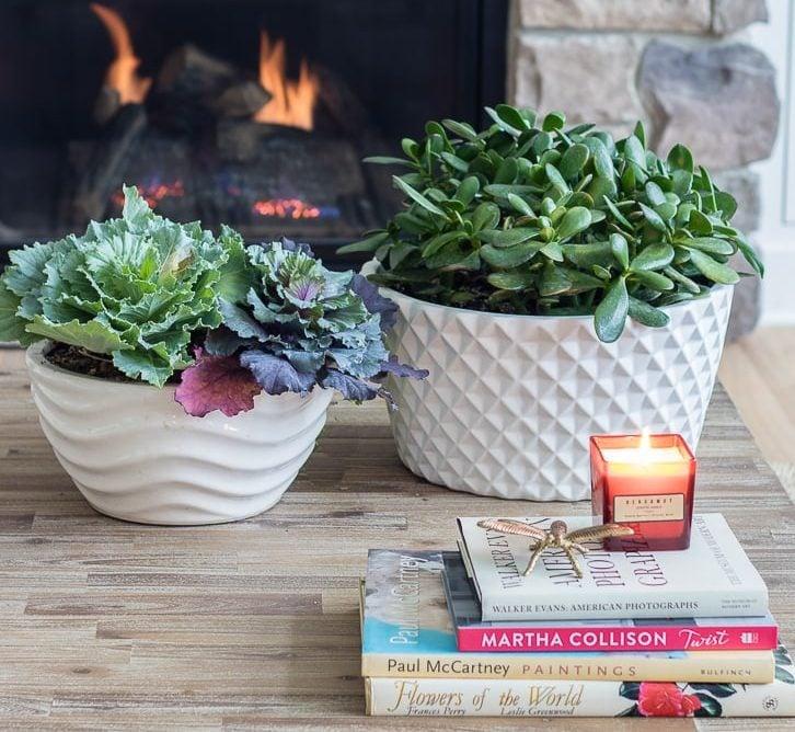 دو گلدان سفید با گیاهان سر سبز و چند کتاب