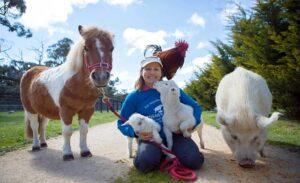 مهربانی با حیوانات وحشی و اهلی در کنار هم